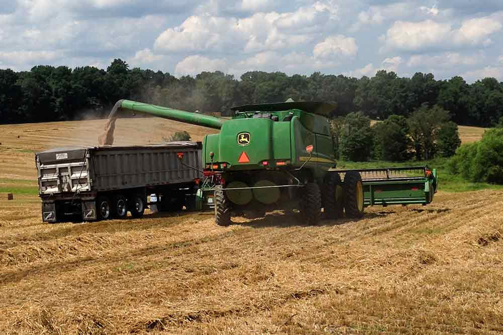 Maryland summer farming services - Beef Cattle, Brush Hogging, Feed Grains, Forages